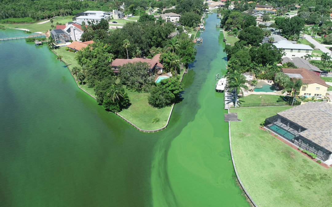 blue-green algae bloom aerial