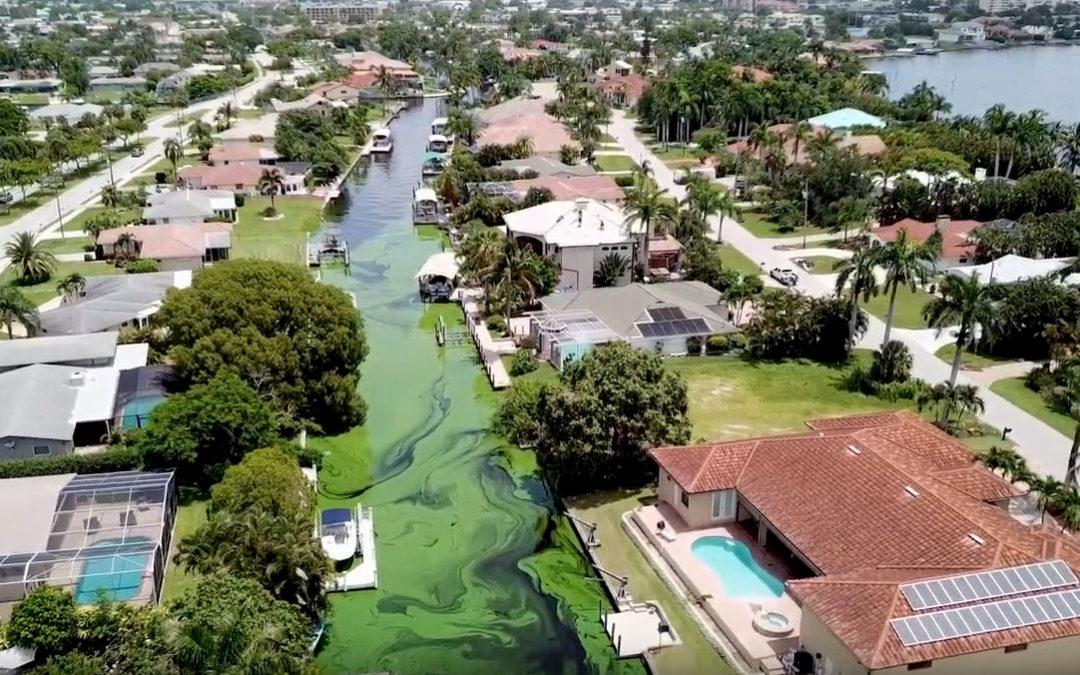 Take Action on Florida's Harmful Algae Blooms