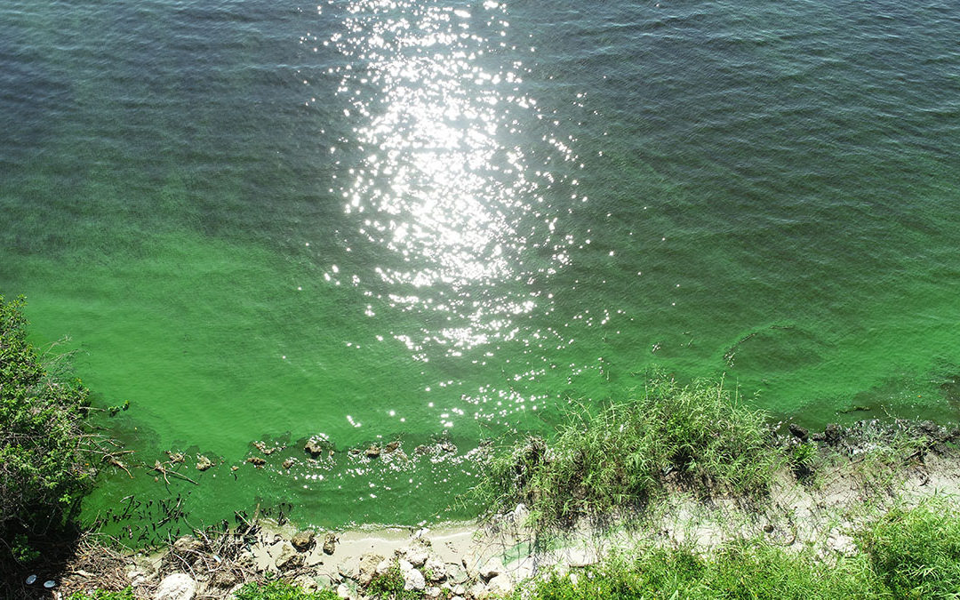 Florida Legislature Must get Serious About Nutrient Pollution in the Water