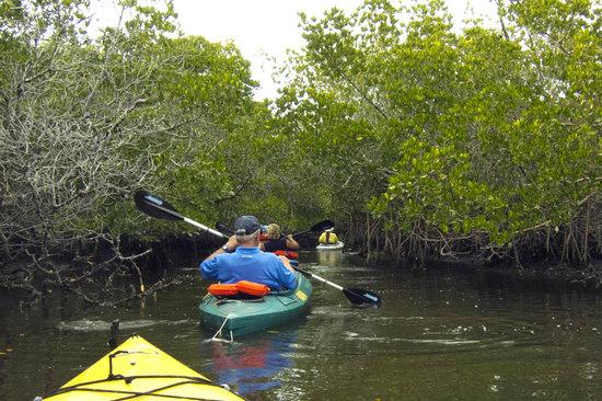 Caloosahatchee kayaking