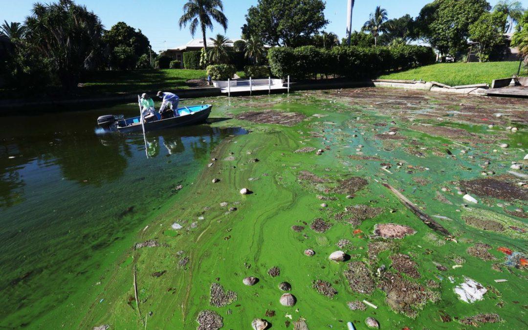 thick algae mats