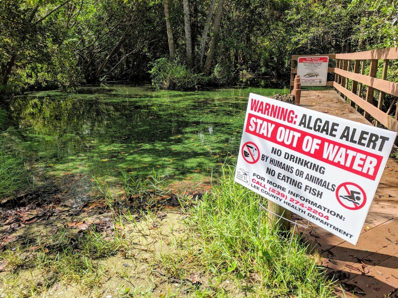 Florida Petitioned to Protect People From Harmful Algae Blooms