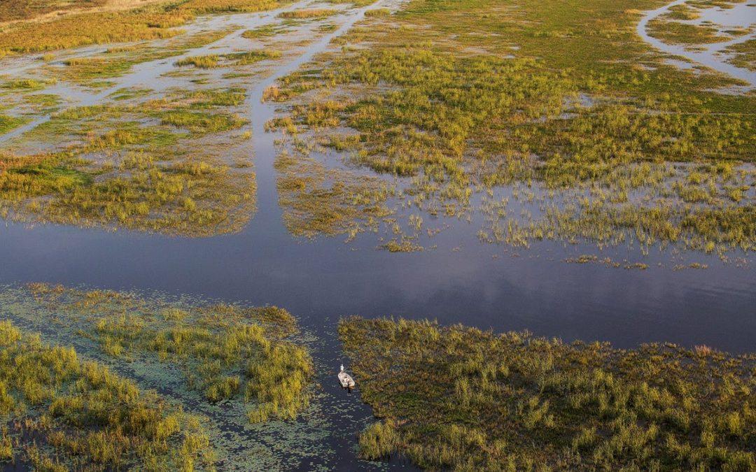 Lake O aquatic vegetation_NEWS PRESS