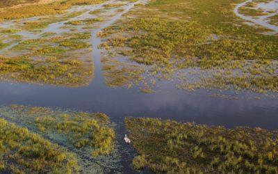 Feedback for the Lake Okeechobee System Operating Manual (LOSOM)