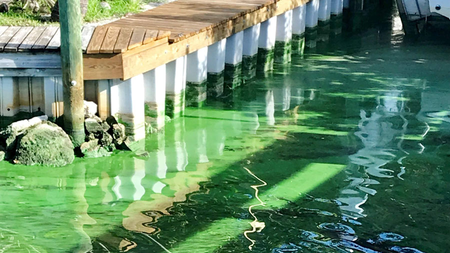 Blue-Green Algae_Tampa Bay Times