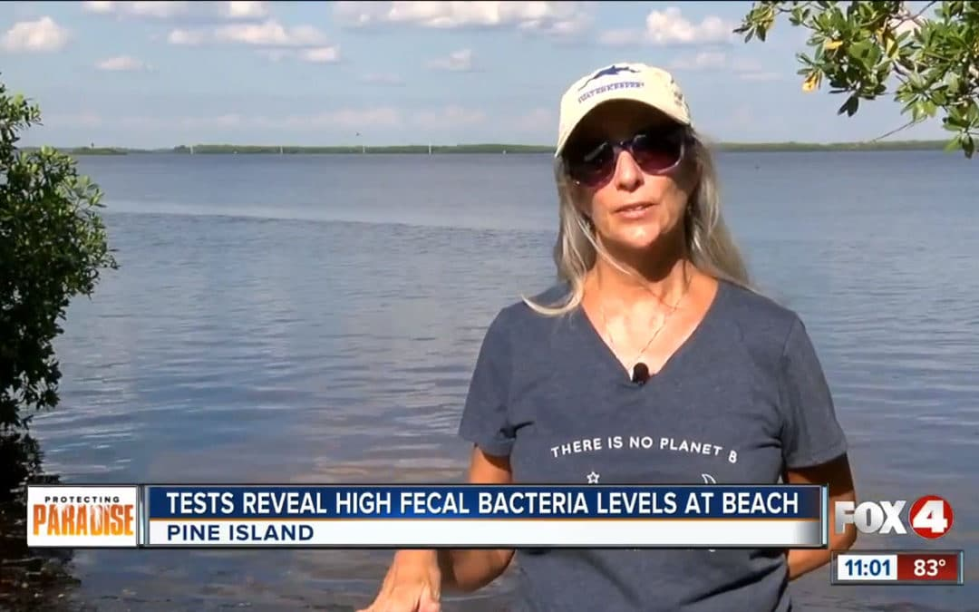 High Levels of Fecal Bacteria on Pine Island Beach