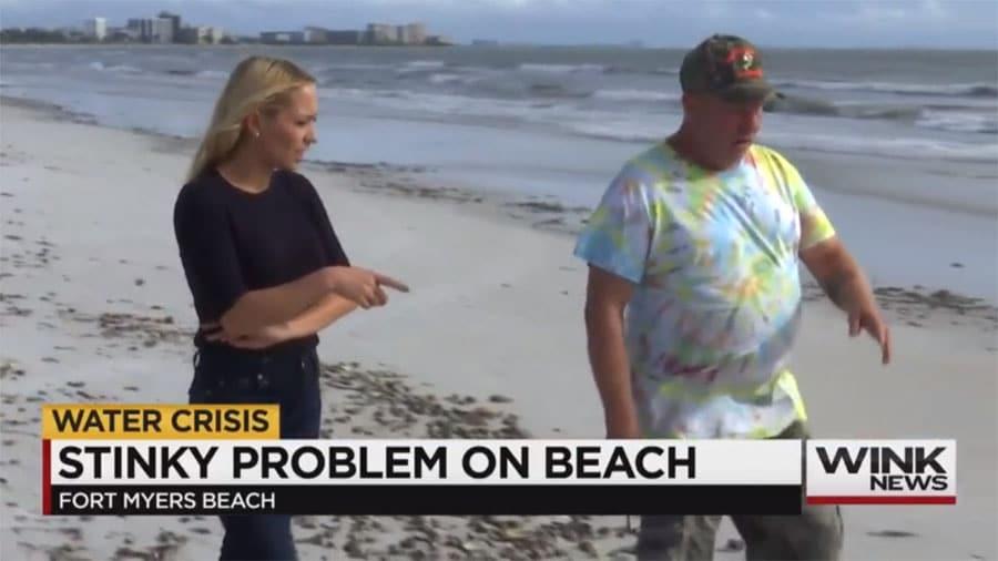 Dead Sea Life, Red Drift Algae Piled up on Fort Myers Beach