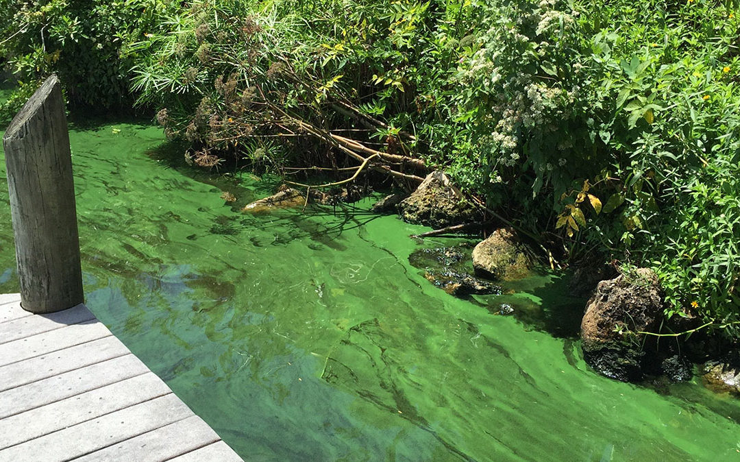 Cyanobacteria HAB_The News-Press