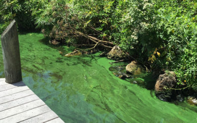 Florida Officials Urged to Set Standards to Protect People, Wildlife From Harmful Algae Blooms