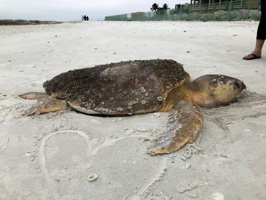 Sea Turtle stranding