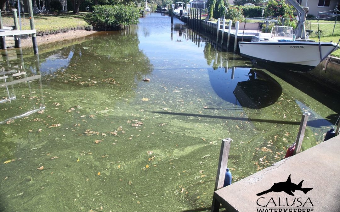 Blue Green Algae on Caloosahatchee January 2020