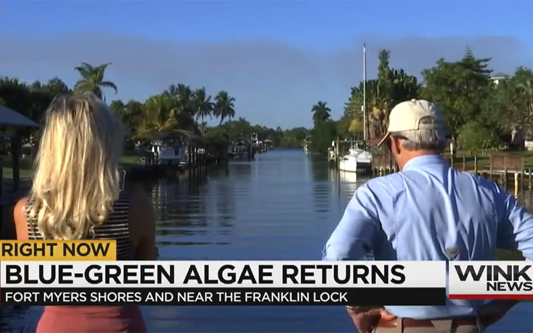 Blue-Green Algae Returns to Fort Myers Shores