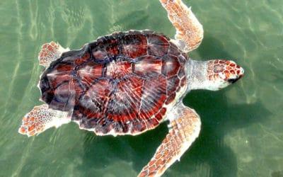 Algae Blooms Triggered by Lake Okeechobee Releases Harm Wildlife and Coastal Communities