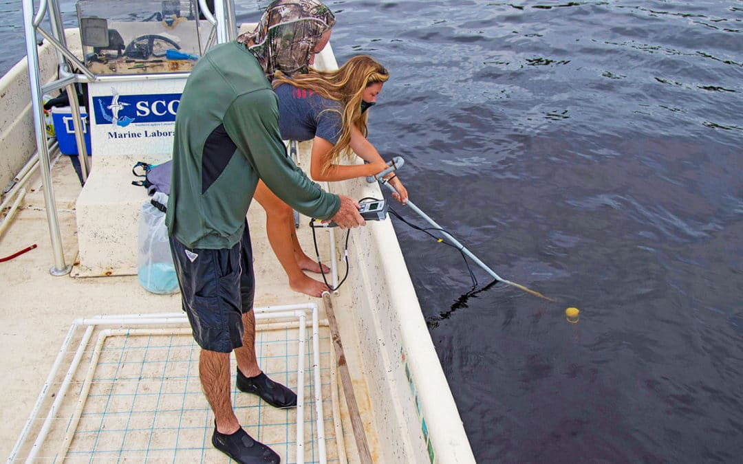 Scientists Mapping Tape Grass in Caloosahatchee in Hopes of Helping Species Recover