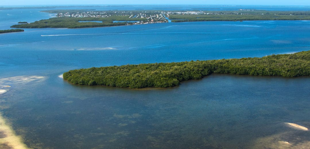 Saving Estero Bay Virtual Event Benefits Water Quality Efforts