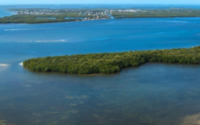 Saving Estero Bay Virtual Event Benefits Water Quality Efforts