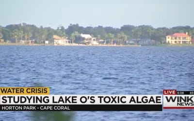 Judge Orders Engineers Study Lake O Water Release Effects on Algal Blooms and Endangered Species