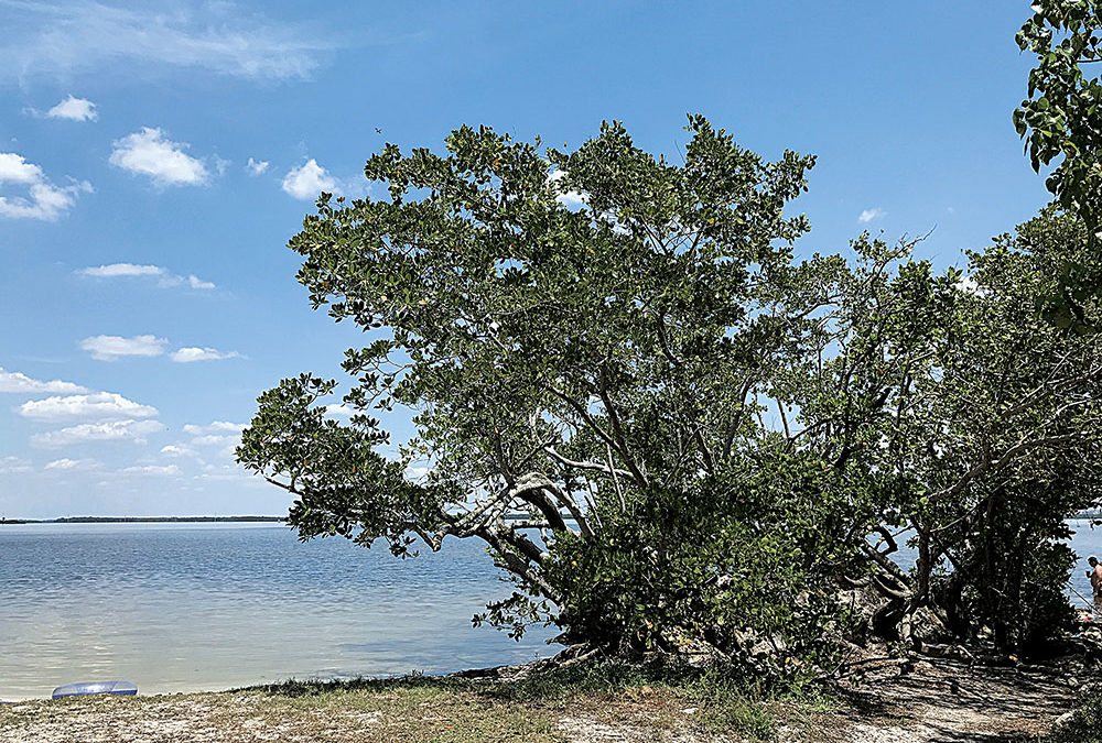 Tropical Point Park Waters Cause Concern