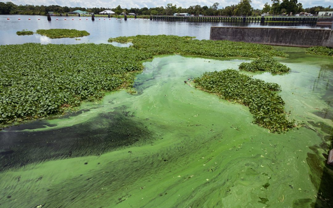 Florida Law does Little to Clean up Waterways