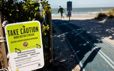 Researchers Warn Red Tide is Back in Southwest Florida