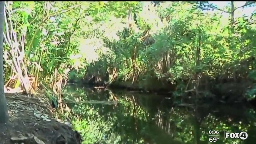 Fort Myers Leaders & Environmental Groups Collaborate for Billy's Creek Clean-up