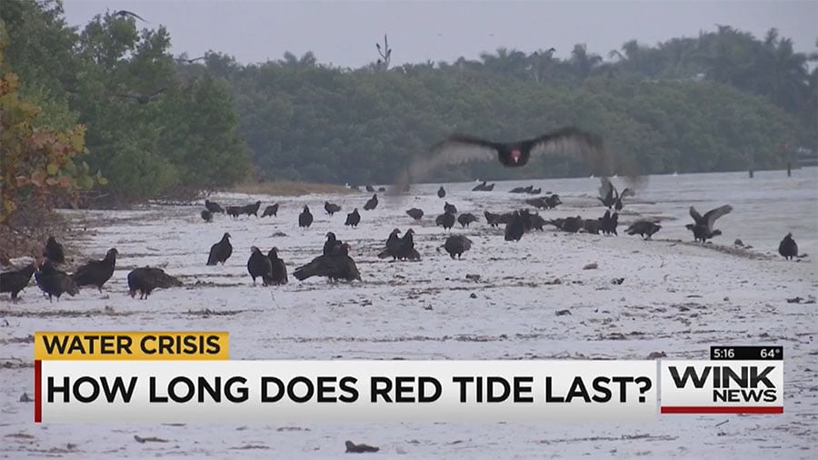 Red Tide Still Plaguing Southwest Florida Shores