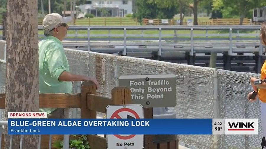 Blue-Green Algae Concerns Mount on Caloosahatchee Amid Rainy Season