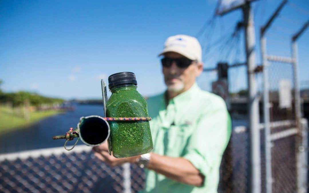 Algae Showing Back up at Franklin Locks and in Parts of the Caloosahatchee River
