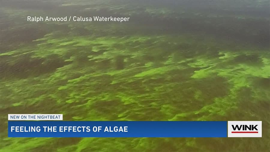 DOH Health Alert: Blue-Green Algae Toxins Found in Caloosahatchee at Franklin Lock