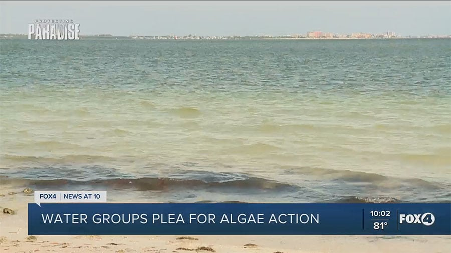 Water Groups Plea for Algae Action from Gov. DeSantis as More Blooms Appear in SWFL Waterways