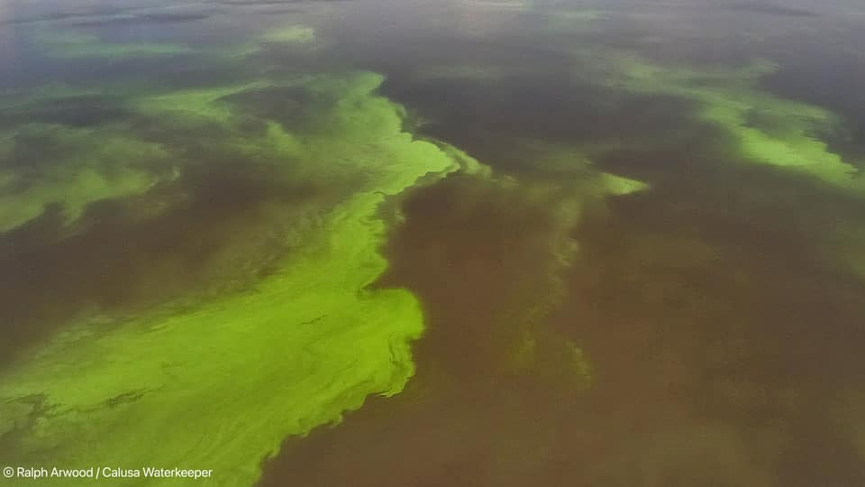 Can Algae Toxins Make you Sick? CDC Seeks South Florida Volunteers to Find Out