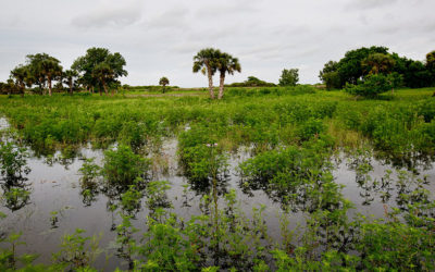 Tests & Research Ongoing at $37M Water District Boma Site in Glades County