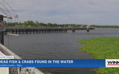 Worries About Algae Treatment After Dead Fish and Crabs Found near Franklin Lock