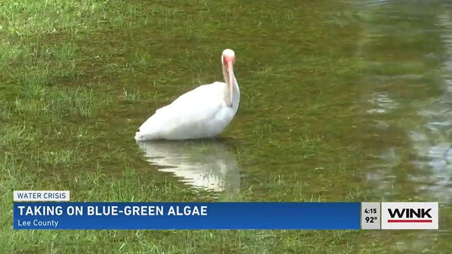 Peroxide-Based Algaecide Pilot Program Underway to Combat Blue-Green Algae