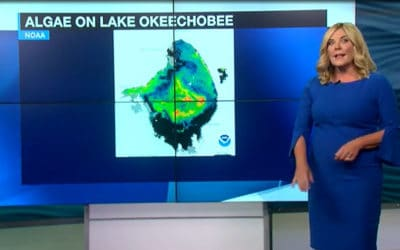 Tropical Storm Elsa Could Worsen the Blue-Green Algae Situation in SWFL