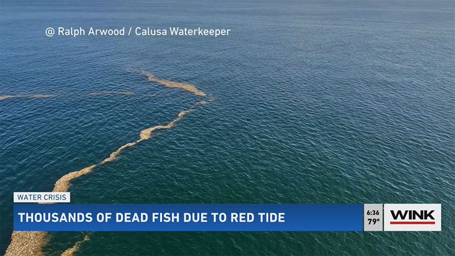 Red Tide Sticking Around Longer Could Cause More Damage