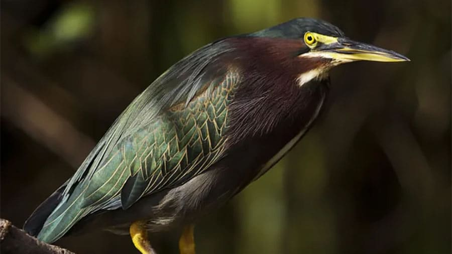 wetland permitting_NEWS-PRESS