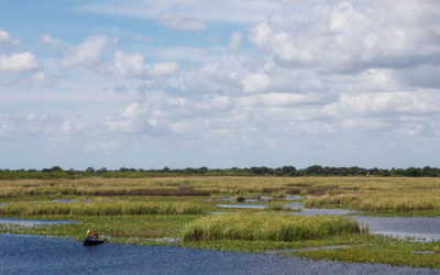 Army Corps to Release Modeling Data for New Lake Okeechobee Plan Later this Month